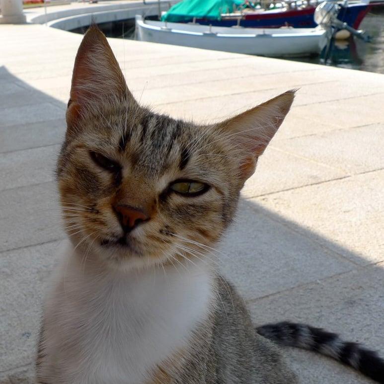 Marina Kitty