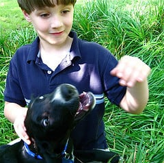 Dogs Who Bite Kids Must Be Put Down