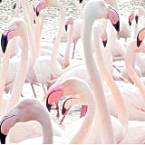 A group of flamingos is called a flamboyance.
