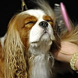 This little one seems to enjoy his blow-dry!