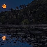 Over at Jensen Lake in Minnesota, the super blood moon looked amazing.