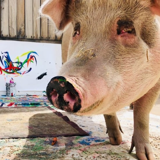 Pigcasso the Painting Pig