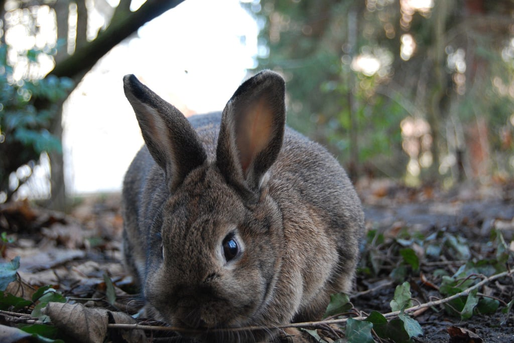 What I'm doing out in these woods is no-bunny's business. Source: Flickr user Robobobobo