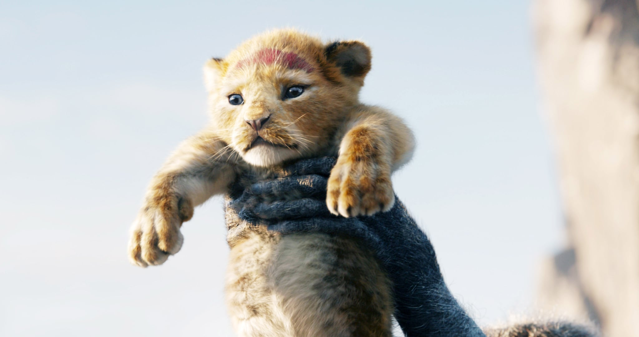 THE LION KING, young Simba (voiced by JD McCrary), 2019.  Walt Disney Studios Motion Pictures / courtesy Everett Collection