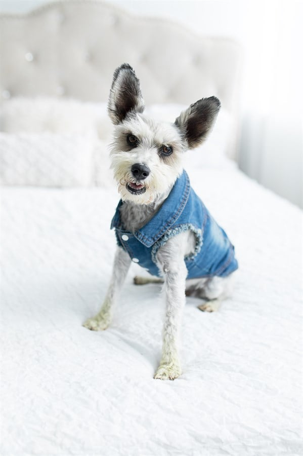 Small Dog Jean Jacket