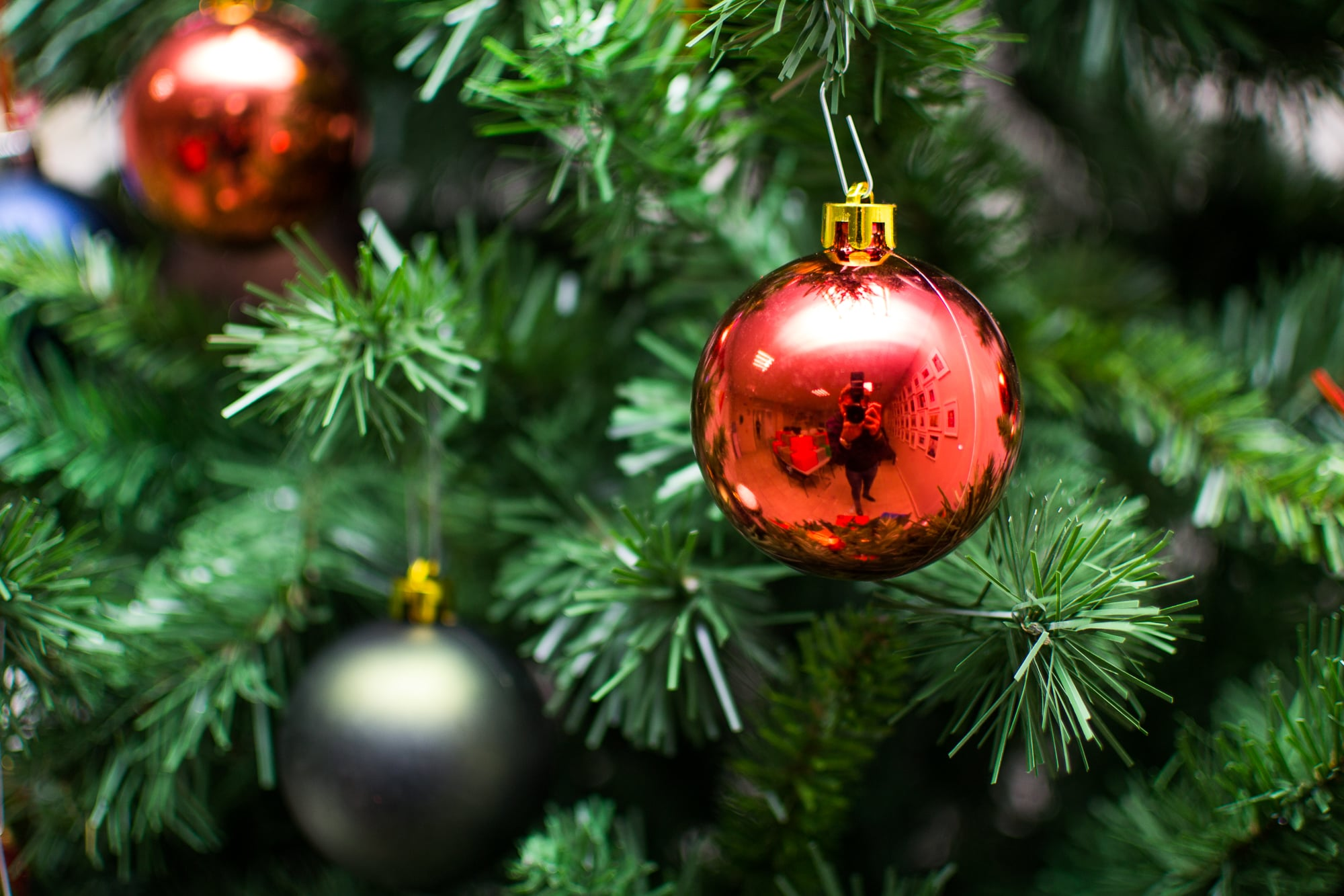 How to Keep a Christmas Tree Alive | POPSUGAR Home
