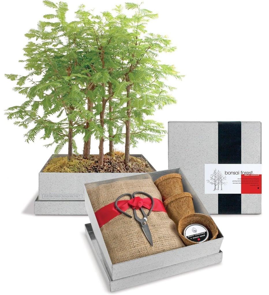 Aries: Bonsai Forest