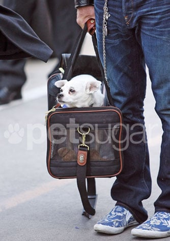 Mickey Rourke and Jaws the Chihuahua Spotted at LAX