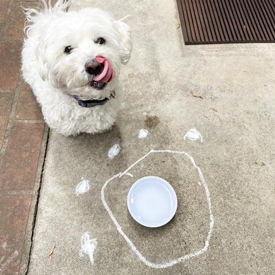 How to Use Chalk to Keep Ants Out of Your Dog's Water Bowl