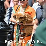 Miley Cyrus headed out in NYC with her dog on Saturday.