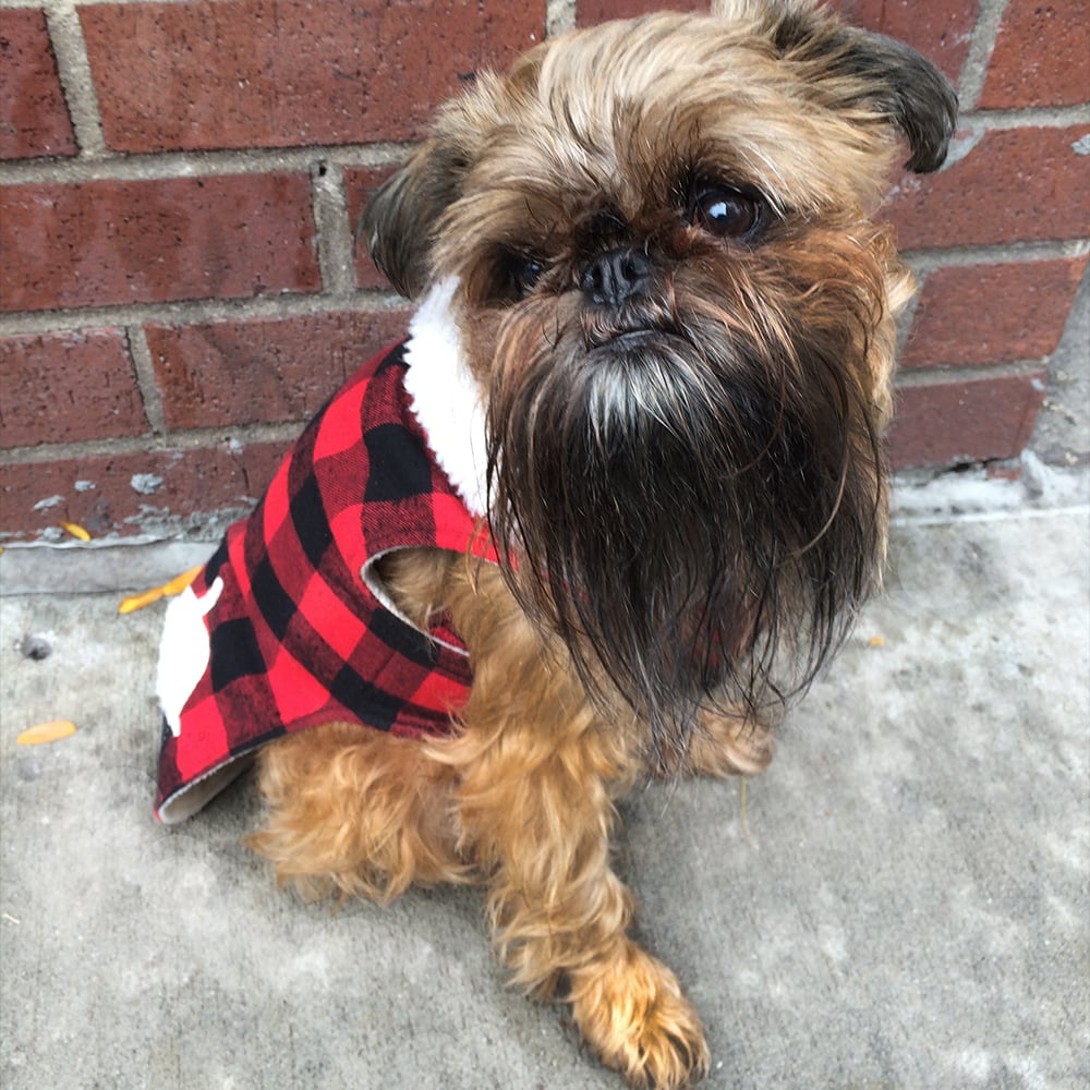 Martha Stewart Pets Buffalo Checker Acorn Coat