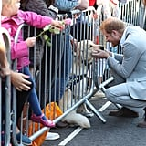 Prince Harry Petting Dogs in Sussex October 2018
