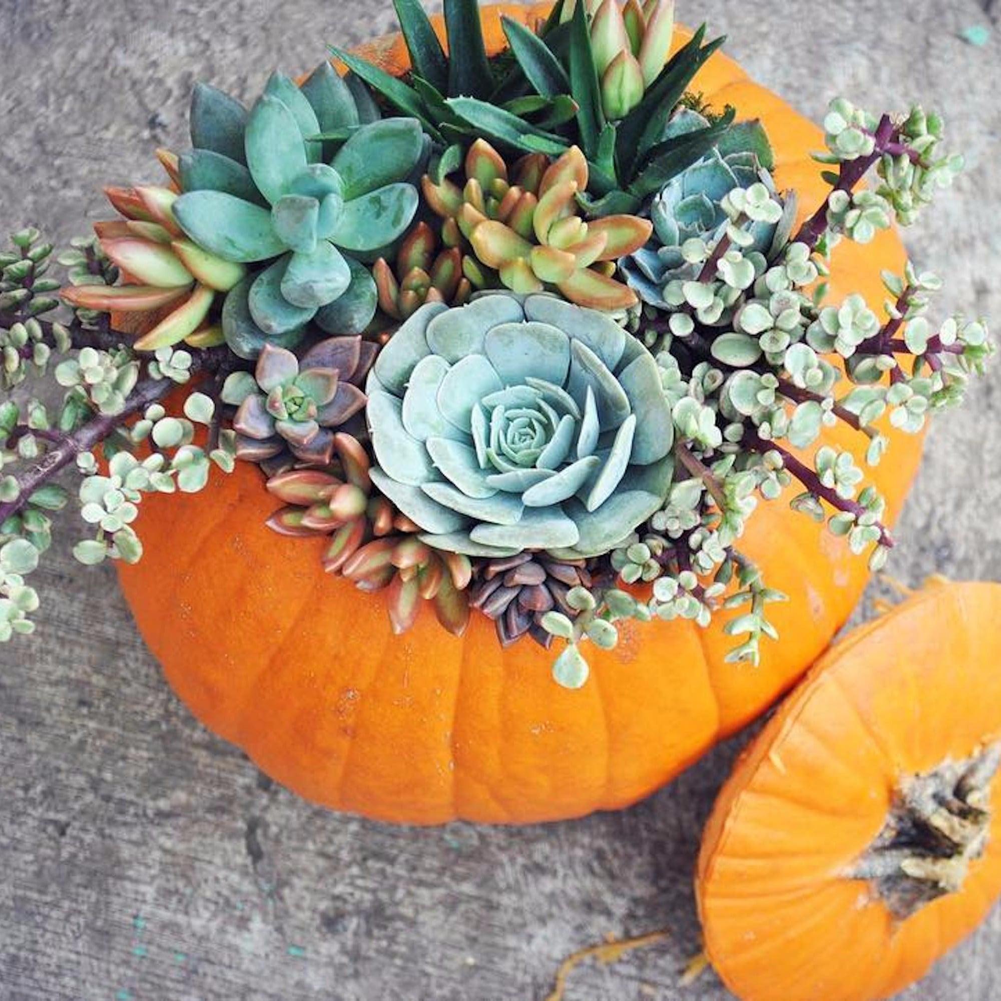Succulent Pumpkins Are The Cutest Diy Halloween Decoration Popsugar Home