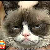 When he tried his darndest with Grumpy Cat.