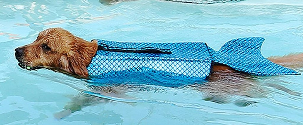 Mermaid Life Jacket For Dogs