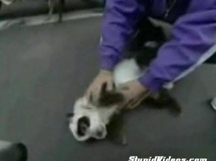 Cute Alert: Panda Dog