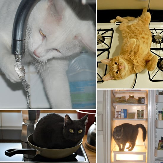 Photos of Cats in Kitchens