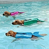 This Trio of Pups Make a Strong Case For Investing in a Mermaid Life Jacket