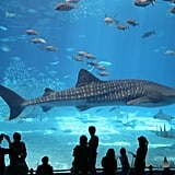 6. The Florida Aquarium, Florida: Kids will love the outdoor water park featuring a 24-foot pirate ship with water cannons and a wave tunnel. The aquarium also has more than 20,000 plants and animals, and interactive elements include photos with baby alligators.  7. Niagara Falls: Take a ride on Maid of the Mist or dine at the Top of the Falls Restaurant. The whole family will love the panoramic views.  8. Botanical Gardens: For picturesque family photos, head to your nearest botanical garden. Children will love seeing the vibrant flowers and running barefoot on the grass.  9. Santa Monica Beach, California: For a beach getaway, head to Santa Monica. When your children are tired from their sandy adventures, head to the piers for a Ferris wheel ride.  10. Golden Gate Bridge, California: Make a pit stop at the Golden Gate Bridge if you take the family to San Francisco. The three-mile-long bridge is walkable and has been declared one of the New Wonders of the World.
