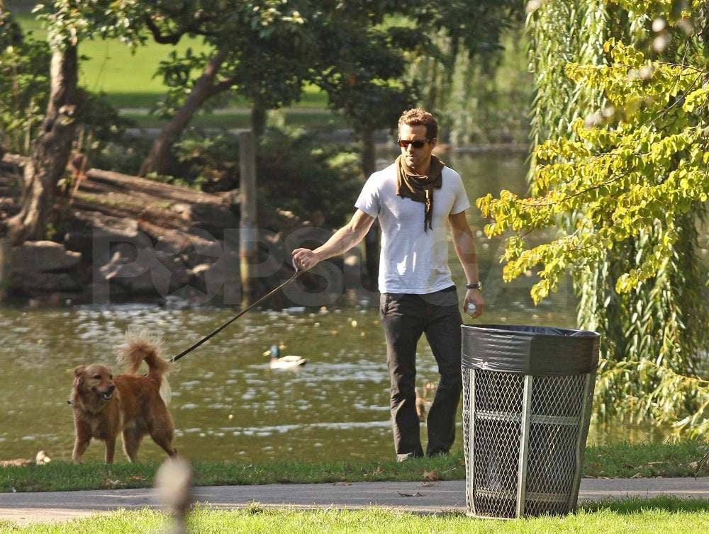 Ryan Reynolds with his dog at a park in Boston.