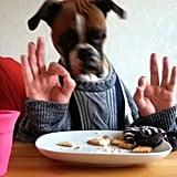 يتلذّذ كلب البوكسر ويندي بطعم شطيرة الهمبرغر بشكل طبيعيّ على ما يبدو.