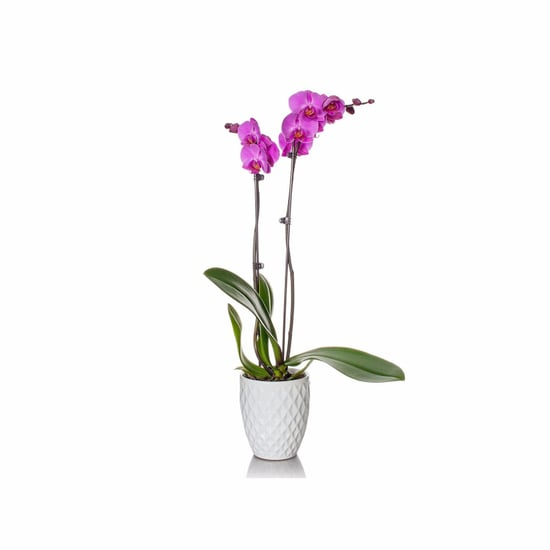 Houseplants on Amazon Prime