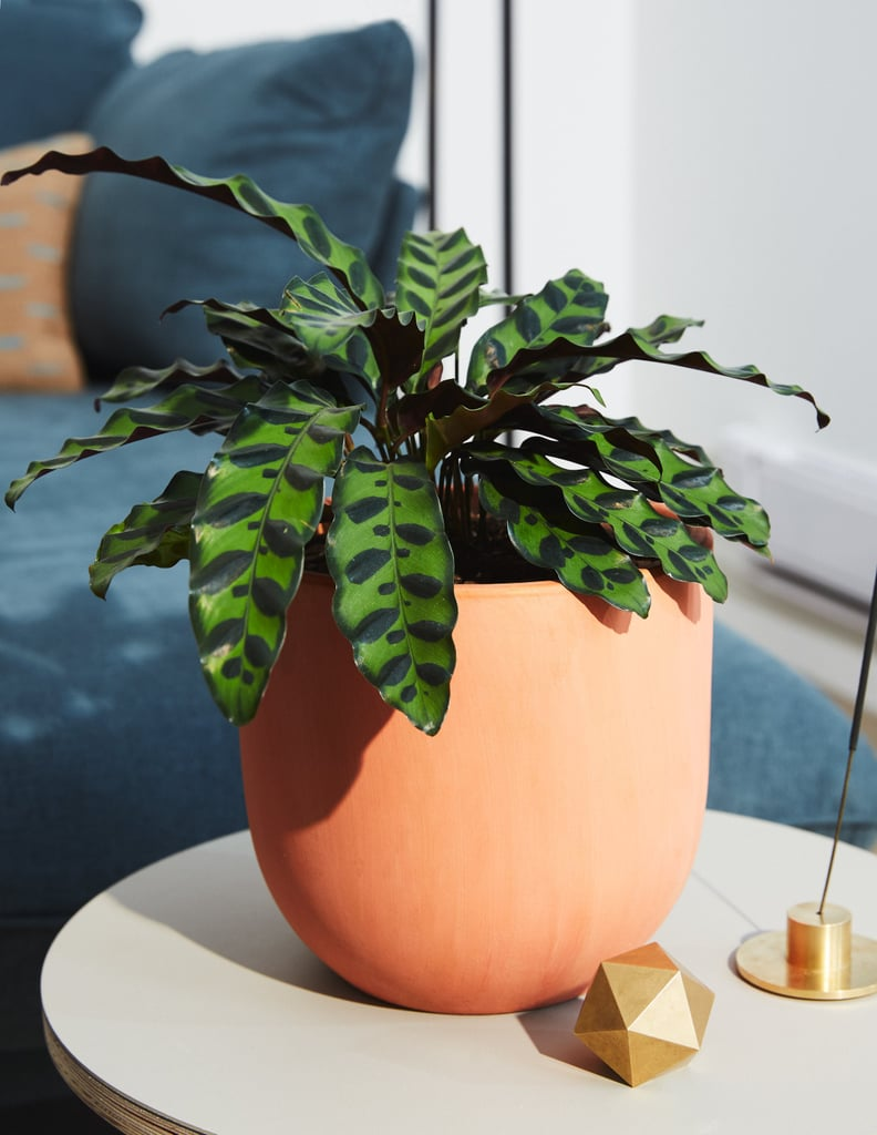 All the Houseplants That Are Good For You, Your Home, and Most Importantly, Your Pets!