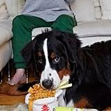 Bark Chow Chow Mein Dog Toy
