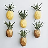 Pineapple Air Plant Magnets With Air Plant