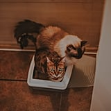Have Multiple Litter Boxes