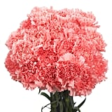 Globalrose Fresh Pink Carnations