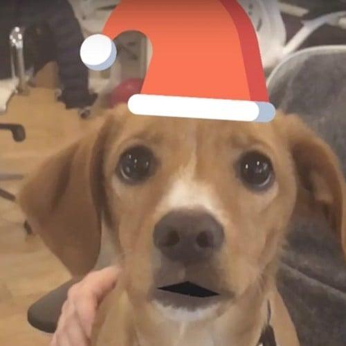 Animated Holiday Cards of Dog
