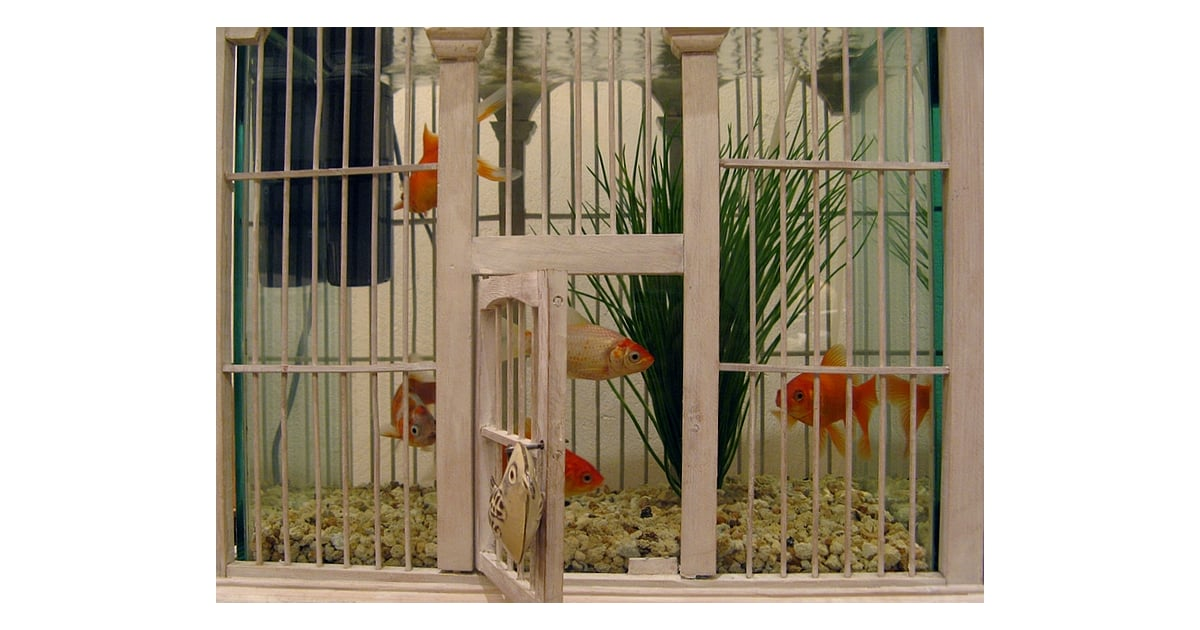 Image result for birdcages with fish