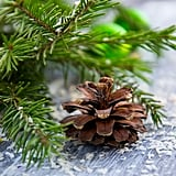 Forage For Christmas Decor