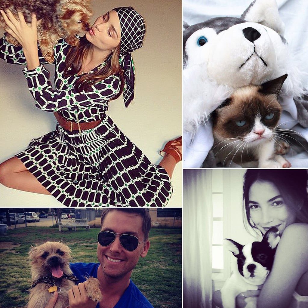 Whole Lot of Lovin' Between Celebs and Pets