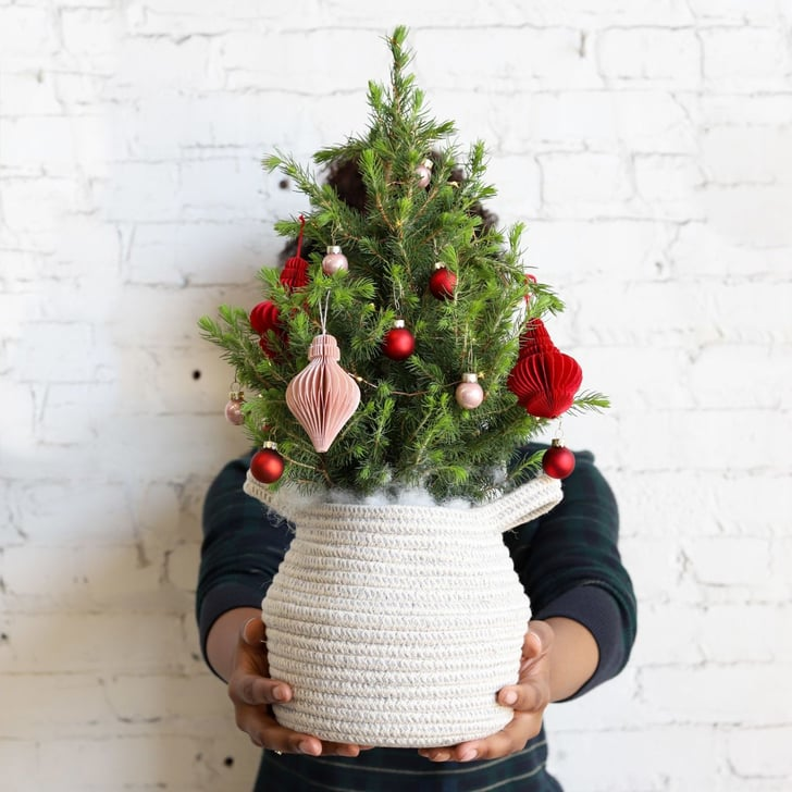 Best Live Tabletop Christmas Trees 2019 Popsugar Home