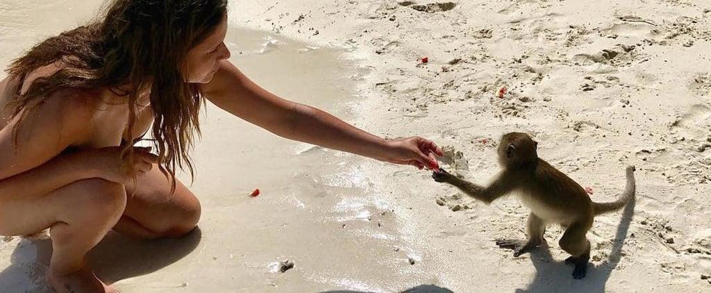 شاطئ القرود في تايلند