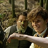 Newt's love for his creatures.