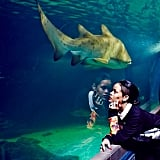 Rihanna checked out the aquarium during her recent trip to South Africa. Source: Instagram user badgalriri