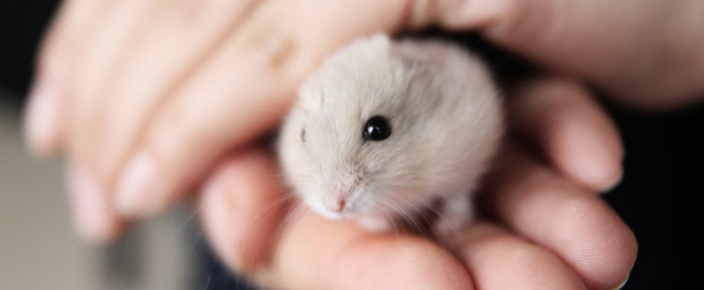 How Do You Get a Hamster to Come Out of Hiding?