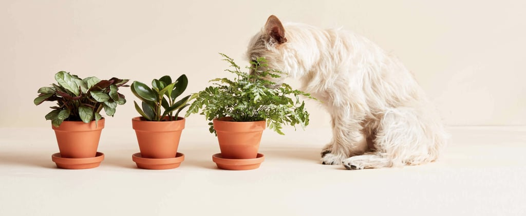 The Best Pet-Friendly Plants From Bloomscape