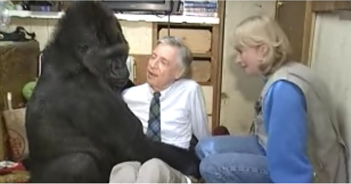Fred rogers koko gorilla sexual harassment