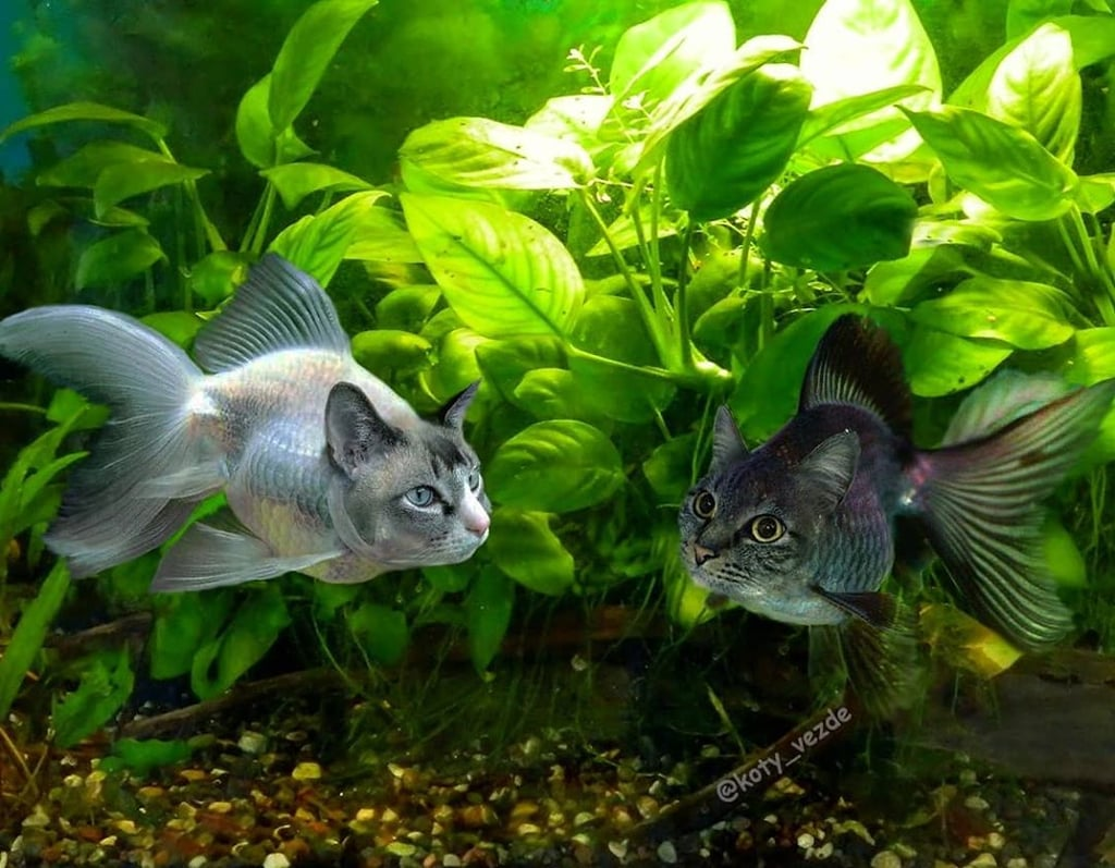 Fish With Cats' Faces