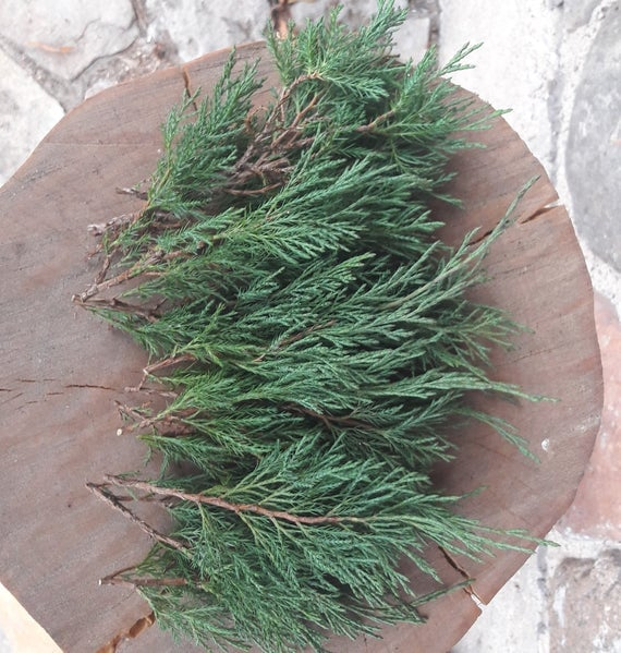 Fresh Cut Juniper Branches