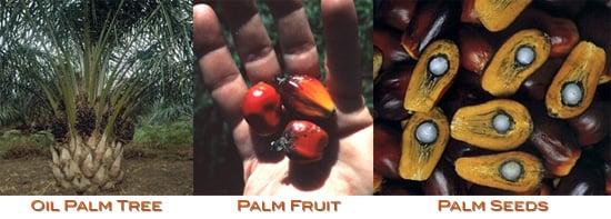Palm Fruit Oil vs. Palm Kernel Oil