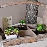 The find: this antique-looking tray, which serves as a succulent holder in this beautiful setup.
