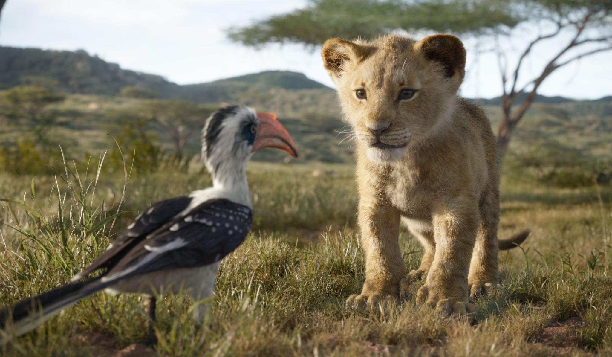 THE LION KING - Featuring the voices of John Oliver as Zazu, and JD McCrary as Young Simba, Disney's