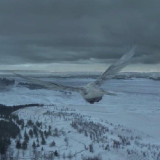 What Do White Ravens Mean on Game of Thrones?
