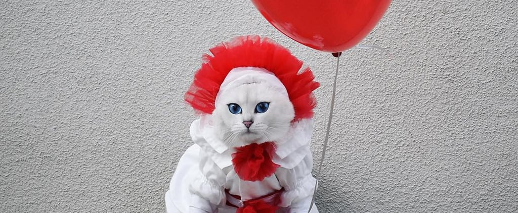 Cat Dressed Up as Pennywise From the It Movie For Halloween