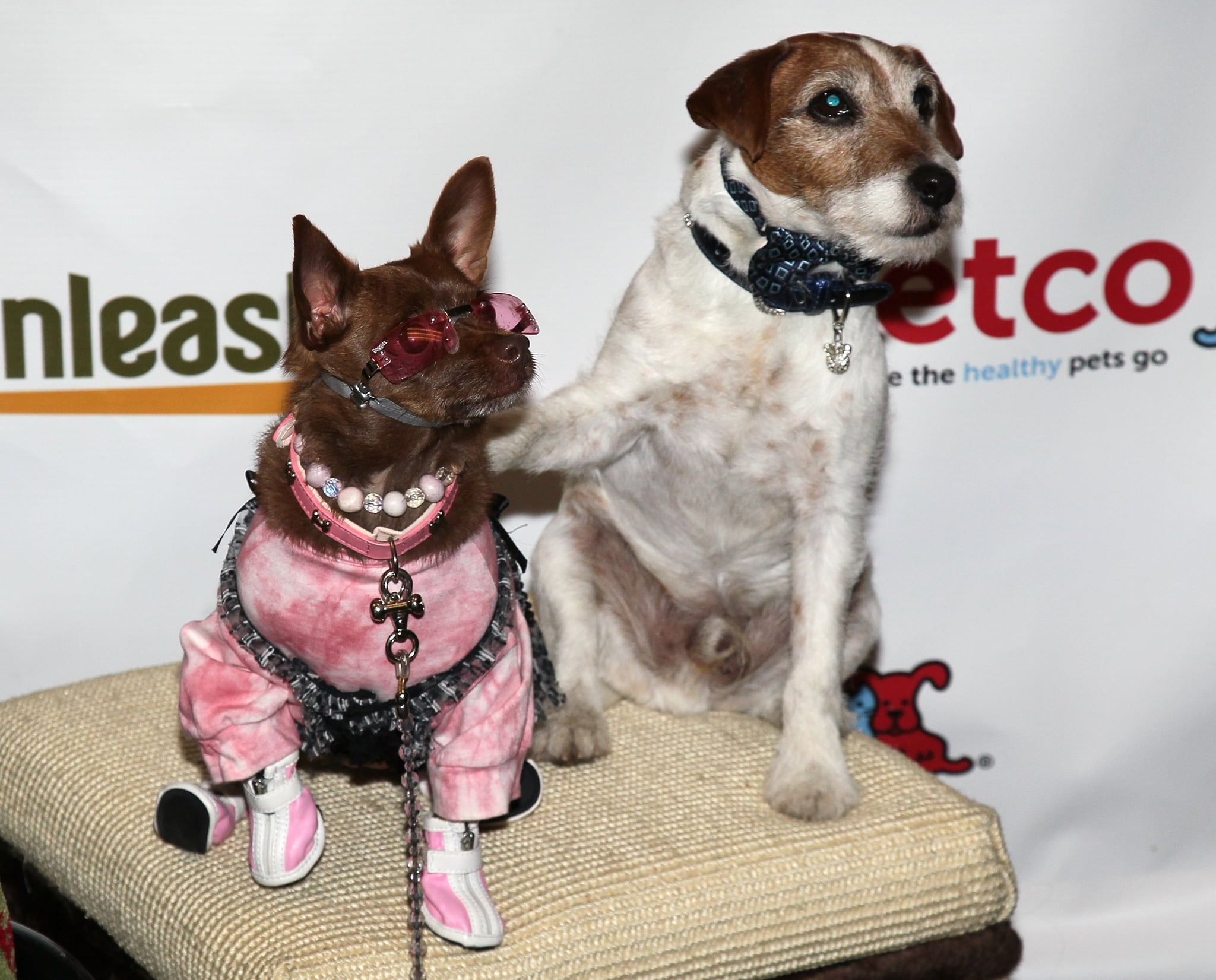 Uggie pauses for a photo op with another well-dressed pet. Source: Getty